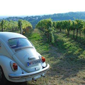 vw beetle in the vines
