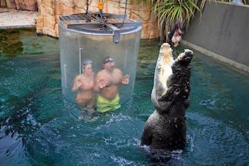 Victoria-Falls-Crocodile-Cage-Dive