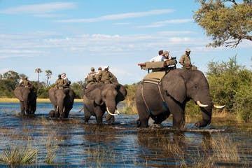 Victoria-Falls-Elephant-Back-Safari