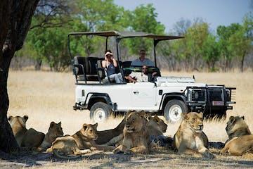 Hwange-Safari-Lions