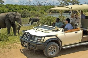 Elephant-Safari