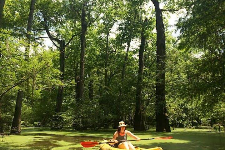 Honey Island Swamp Tours Hours