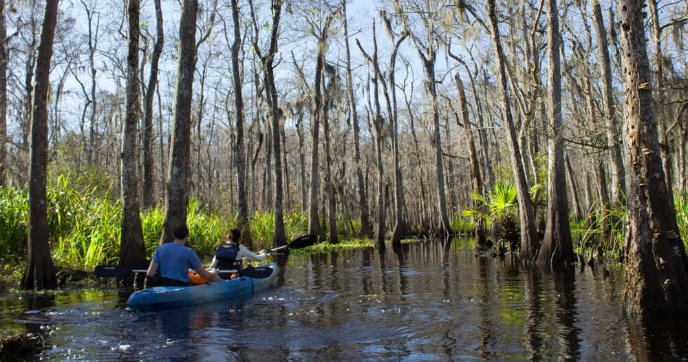 two kayakers in one kayak paddle through a meandering corridor in the Manchac swamp