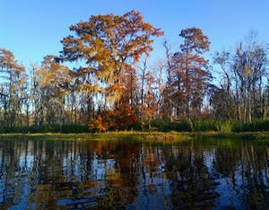 What autumn looks like in the swamp