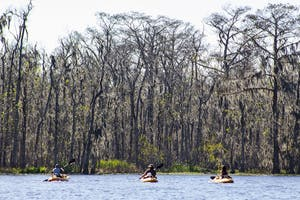 What it looks like to kayak in winter, the cypress trees are barren, but beautiful