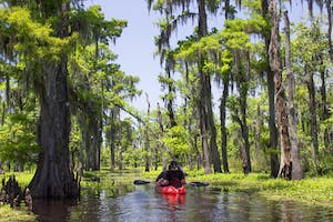a kayak touring past some cypress trees in summer