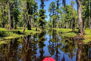 Shell Bank 1/2 Day Extended Bayou Adventure