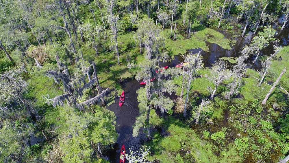 Aerial view of kayaks
