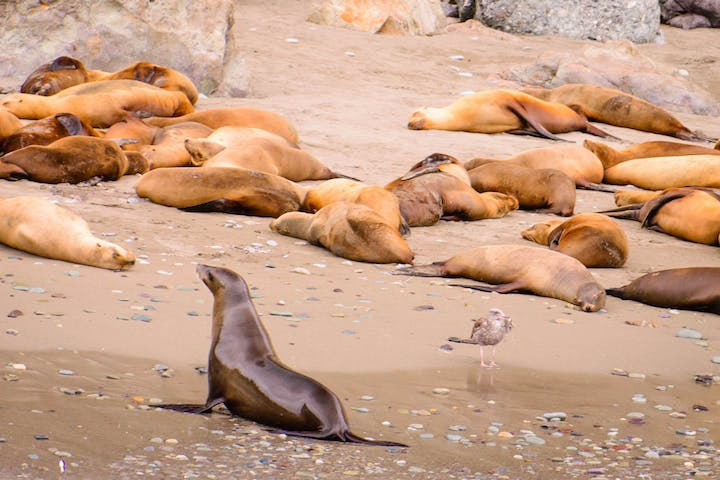 Seals relaxing on the beach