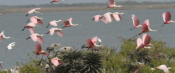pink birds flying