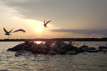 a flock of seagulls flying over a body of water