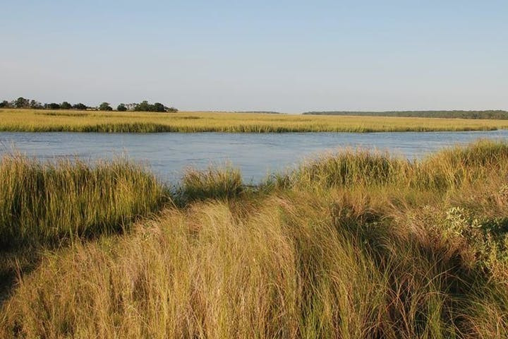 View of marshes