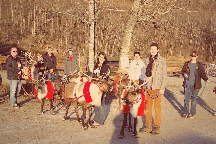 reindeer farm reindeer christmas sled tour
