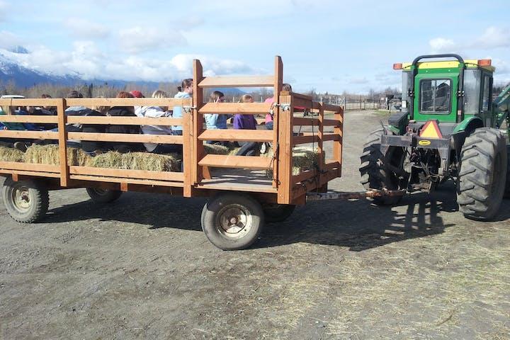 reindeer farm reindeer tractor