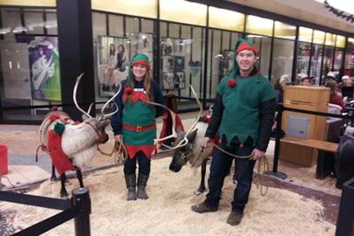 reindeer farm reindeer elves christmas show