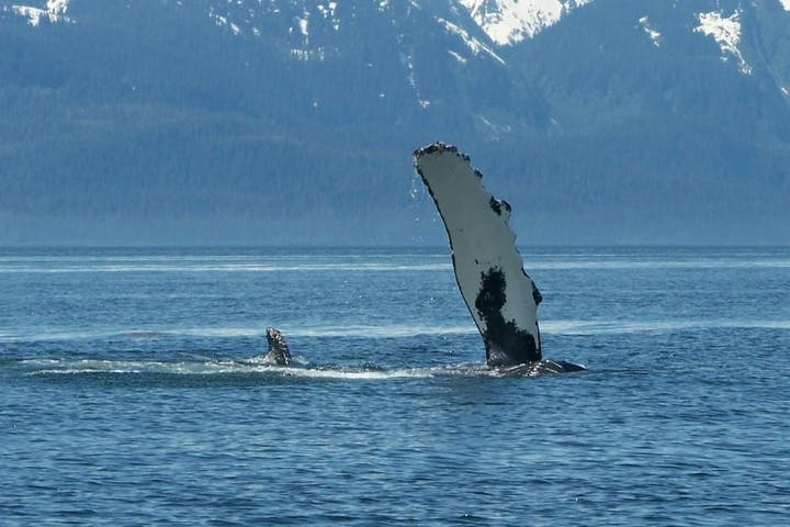 Whale Watching fin