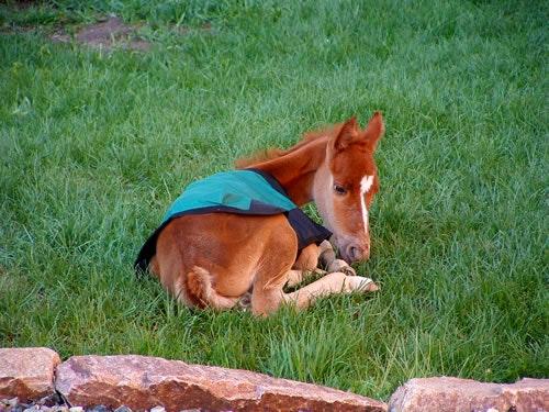 Foal - Del's Triangle 3 Ranch