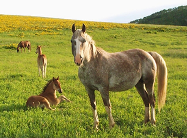 Mares & foals relaxing in the meadow.