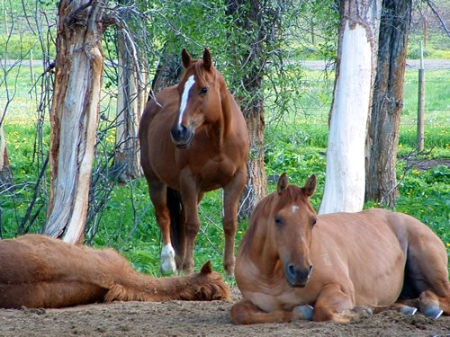 Horses relaxing in the afternoon.