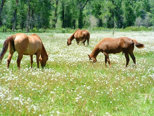 Horses taking a lunch break.