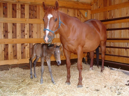 Mom and foal in stall.