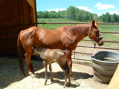 Mom checking on her foal.