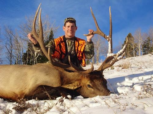 Big 6x6 bull elk