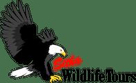 Sitka Wildlife Tours | Scenic Tours of Sitka, Alaska