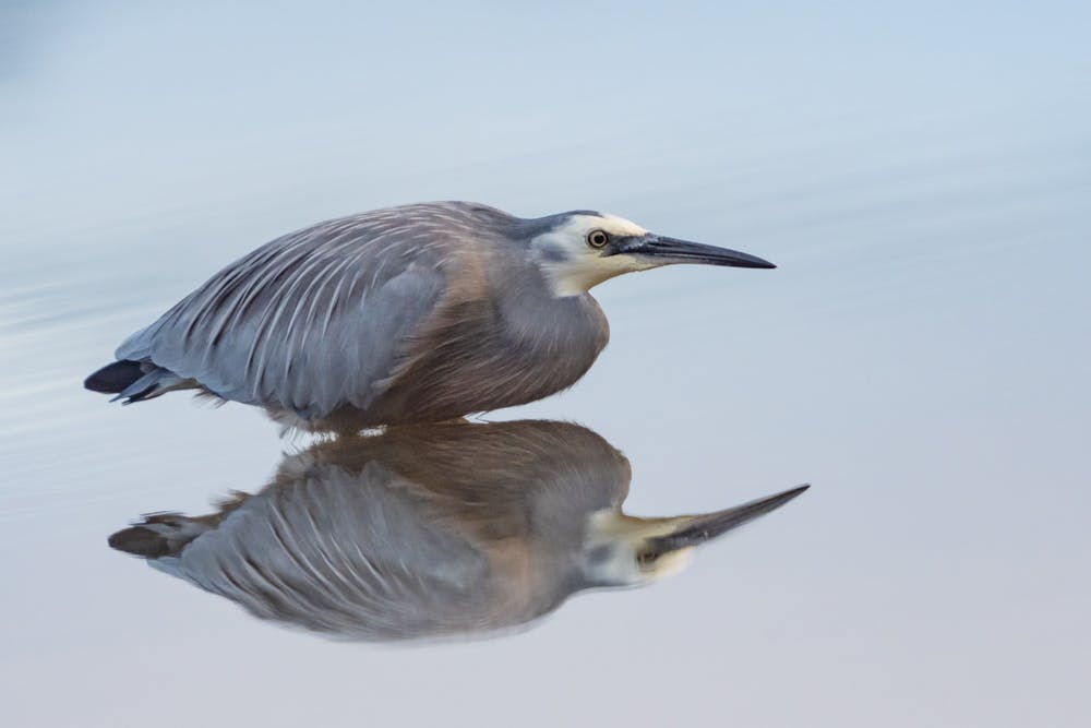 a bird standing next to a body of water