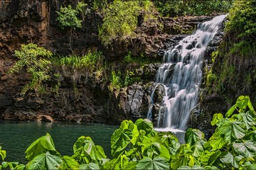 a waterfall surrounded by green leaves