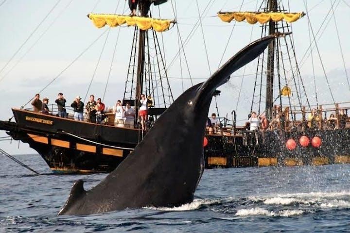 Kraken Chase Whale Watching Tour