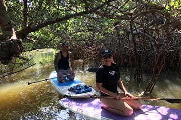 2 people on stand up paddle boards in the mangroves