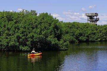 kayaker-in-mangroves