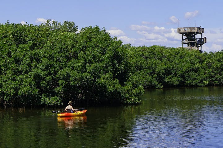 kayaker-in-mangroves