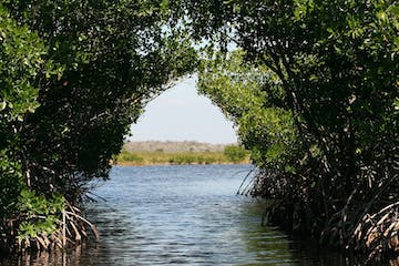 mangrove tunnel looking in to clearing