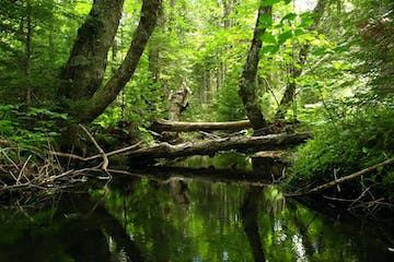 Creek in thick forest