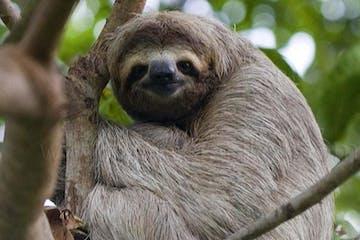 sloth smiling
