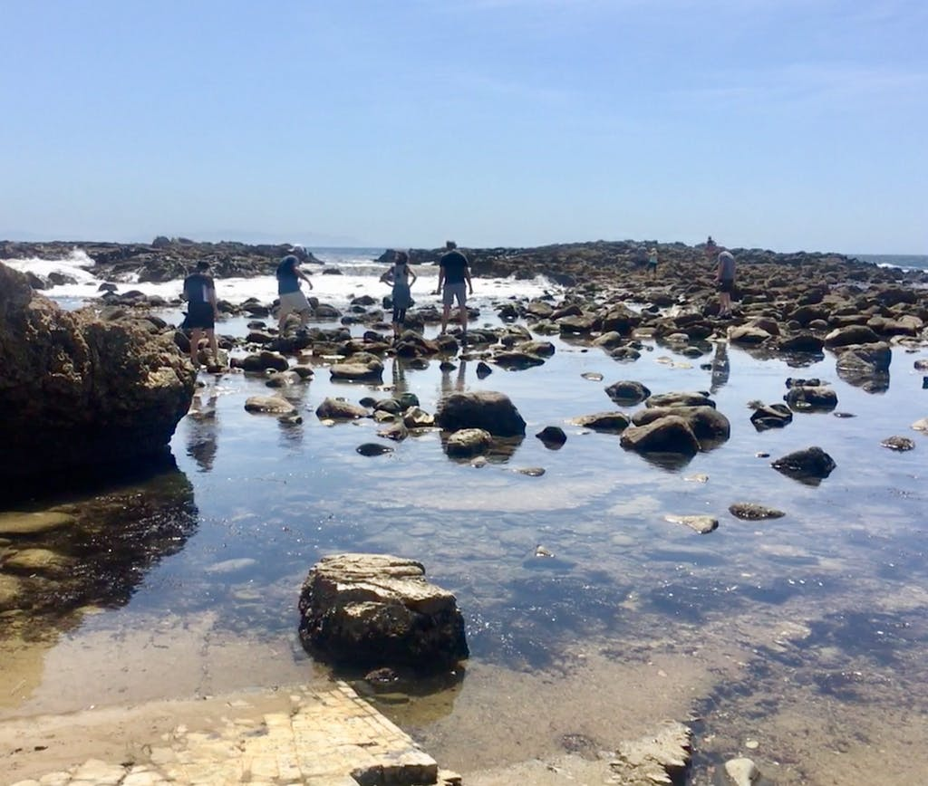 a group of people hiking through tidepools in terranea ca