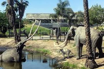 a large elephant standing next to a body of water with La Brea Tar Pits in the background