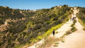 Runyon Canyon Hikers