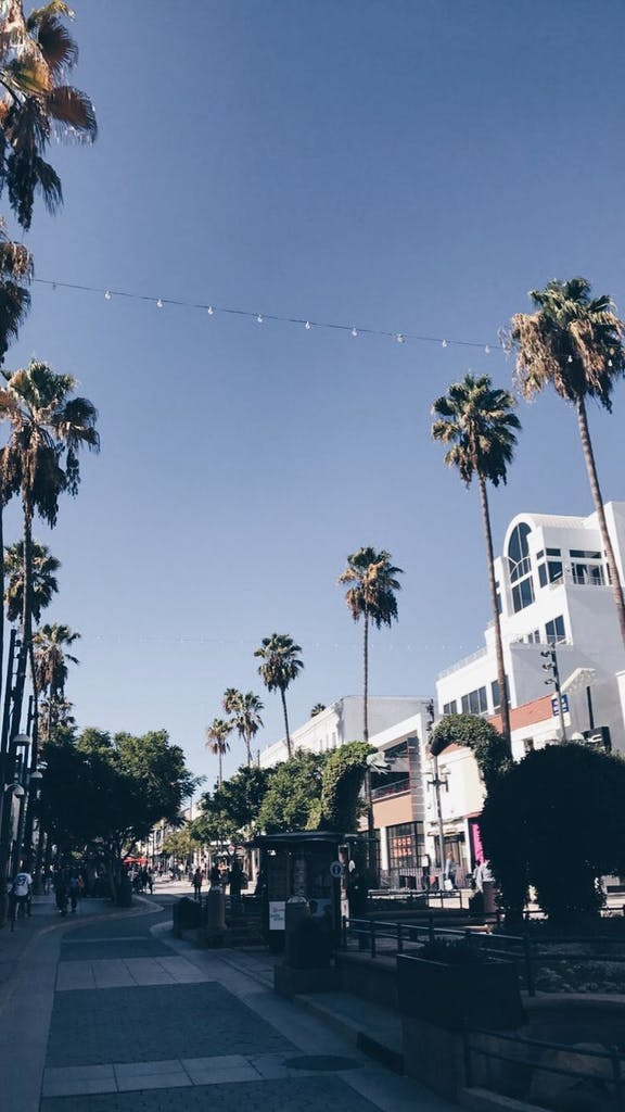 a palm tree on a street