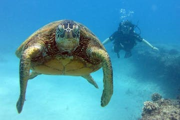 Sea turtle near shallow reef in Oahu, Hawaii