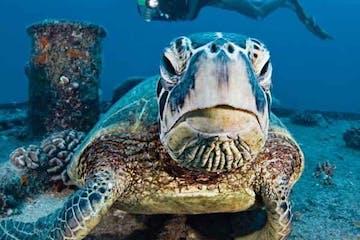 Sea turtle at wreck sea dive