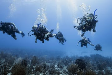 7 people scuba diving