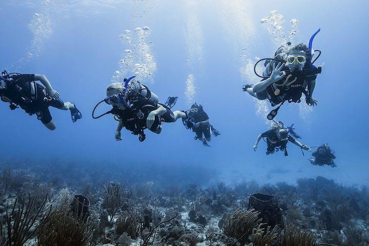 7 people scuba diving