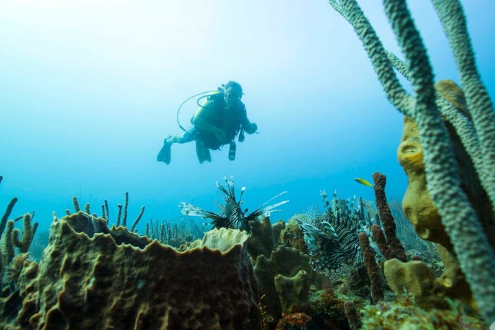 1 person scuba diving above coral