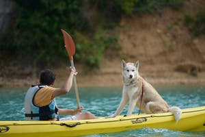a person and a dog on a boat in the water