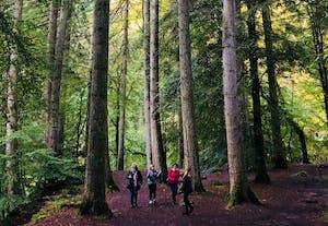 Bosque del Ermitaño