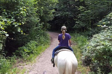 Horseback riding on woody trail