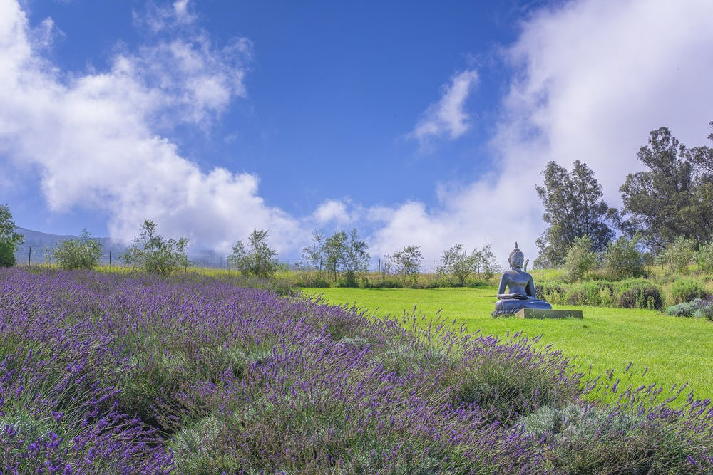 Ali'i Kula Lavender Farm Buddha Statue
